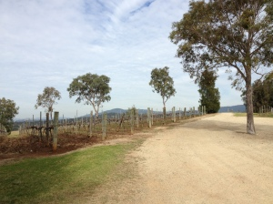 Scenic drive through wine country